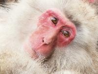 Prvá banka, ktorá nenaložila makakom japonským zbytočné poplatky k hypotéke.